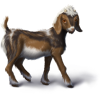 Pygmygoatbrown