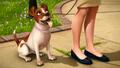 Tootsie-Bella in Doggoneit.png