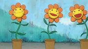 1-FlowerTiramieFlowerAdventure