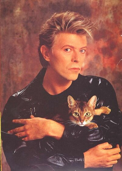 Catbowie