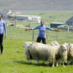 Shelley & Nici herding sheep in the third leg.