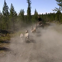 Katie performs the dog-sled Roadblock in the <a href=