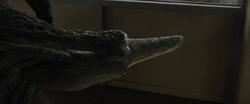 Lizard Regenerates his Tail