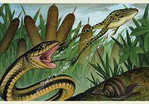 Frog-snake-3
