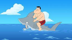 Shark?!