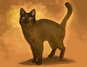 Black Phoenix the small brown cat