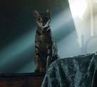 Bast in Cat form