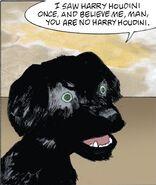 AG Comic black dog 2