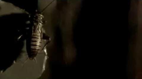 American Horror Story Season 6 Teaser 7 Hang Tight HQ