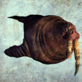 Walrus render