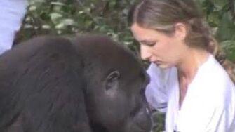Ein Mädchen trifft einen Gorilla wieder, den sie seit 12 Jahren nicht mehr gesehen hat
