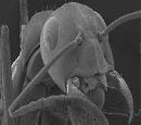 AmeisenHorizont