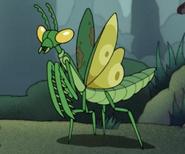 Large Mantis