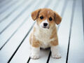 Cute-puppy-SAVED-YAY-adorable-animals-are-in-need-just-help-33290382-1600-1200.jpg
