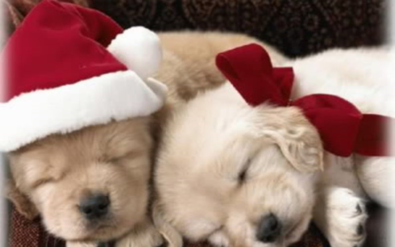 Image Christmas Puppy puppies 1280 800
