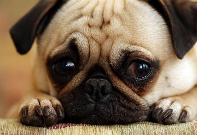 File:Sad puppy.png