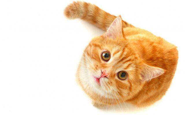 File:A cat.jpg