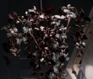 BlossomedDraconiaVines