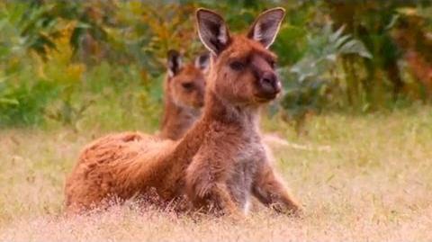Kangaroo Island, Australia - Lonely Planet travel video