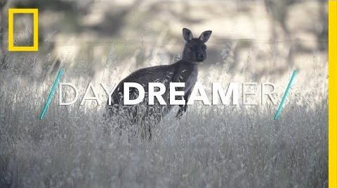 Welcome to the Wild World of Kangaroo Island National Geographic