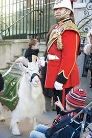 William windsor (goat)