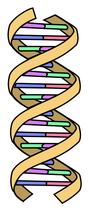 DNA-equal-grooves