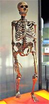 339px-Neanderthalensis