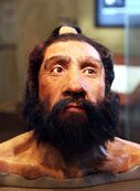 800px-Homo neanderthalensis adult male - head model - Smithsonian Museum of Natural History - 2012-05-17