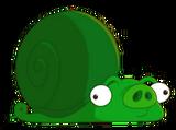 Snail Pig