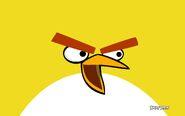 Yellow-Bird-angry-birds-34496605-1920-1200 (1)