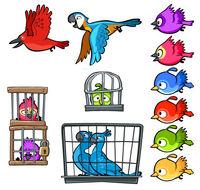 CageBirds