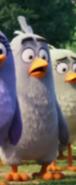 Филлип среди других птиц3