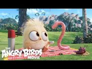 The Angry Birds Movie - See the Brand-New Hatchlings Short In Theaters!