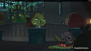 Свинья злится