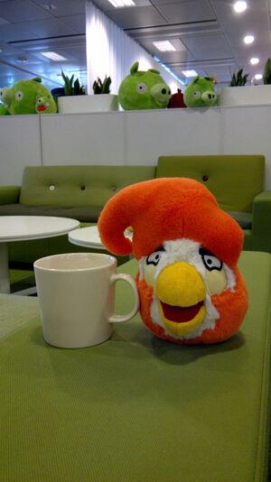 Coco Bird