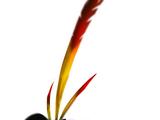 Tony (Angry Birds Evolution)