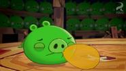Pig Talent 13