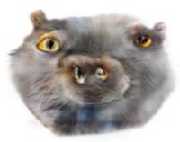 Котдва