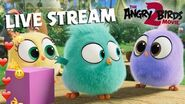Angry Birds Movie 2 Live Stream Hatchlings