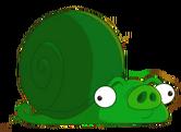SnailPig