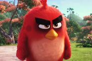 Red The Angry Birds