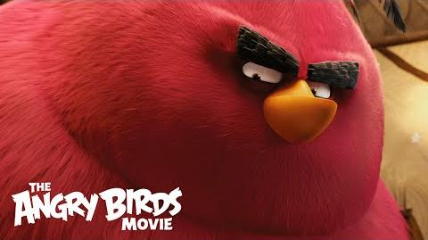 The Angry Birds Movie - Clip 2 Meet Terence