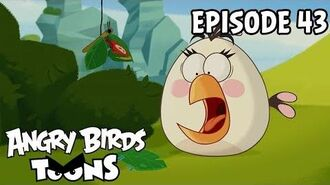 Angry Birds Toons The Butterfly Effect - S1 Ep43