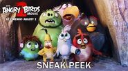 Angry Birds 2 - Exclusive Sneak Peak - At Cinemas August 2