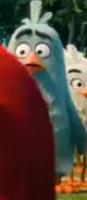 Филлип среди других птиц4