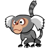 File:Marmoset 1.png