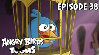 Angry Birds Toons A Pig's Best Friend - S1 Ep38