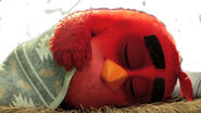 Angry Birds Movie Red Sleeping