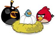 Птицы и яйца