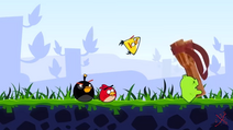 Haha świnia zabiera procę angrybirdsom